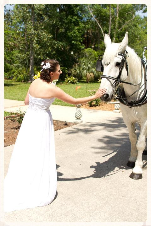 White carriage horse for weddings in Florida